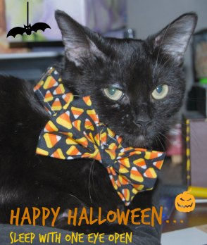 halloween-sally