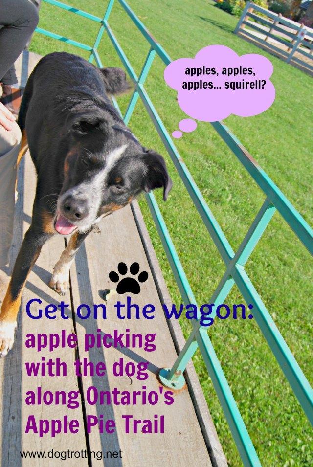 travel dog-friendly Apple Pie Trail