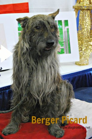 Westminster Dog Show 2017 Meet and Compete