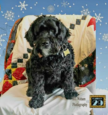 Victor Christmas photo www.dogtrotting.net
