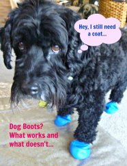 dog-boot-overview