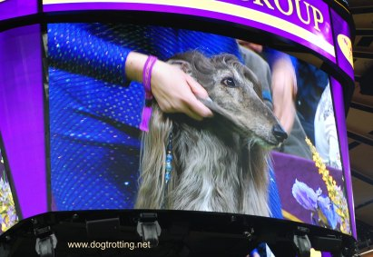 hound-group
