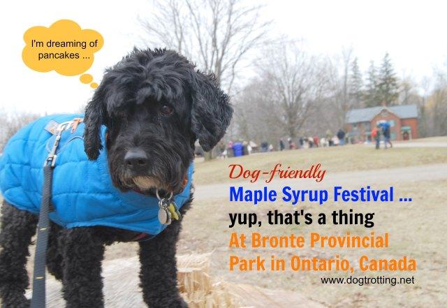Maple Syrup Festival Bronte Creek Provincial Park
