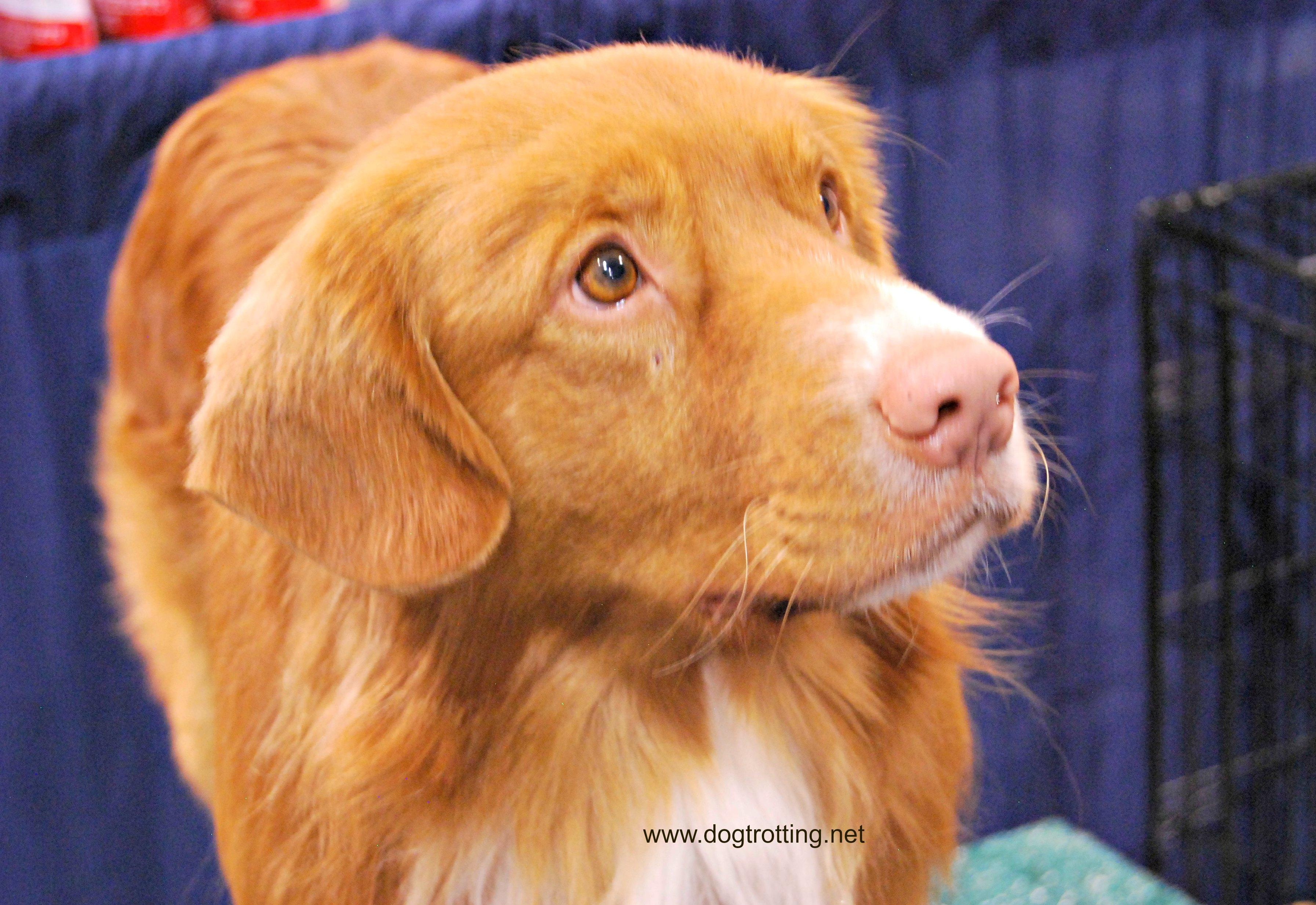 Canadian Pet Expo - Dog
