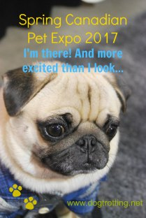 Canadian Pet Expo - pug www.dogtrotting.net
