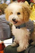 cute dog at Spring Canadian Pet Expo 2017