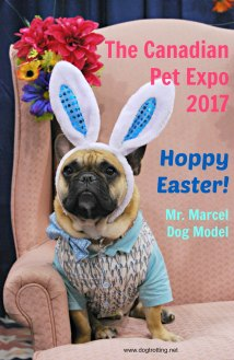 cute dog with rabbit ears at Spring Canadian Pet Expo 2017