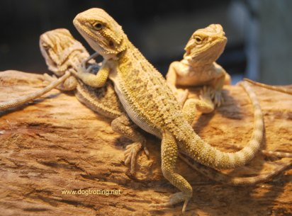 reptiles at Spring Canadian Pet Expo 2017