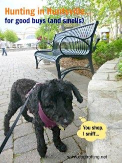 dog shopping at Bridge Street Town Center, Huntsville, Alabama