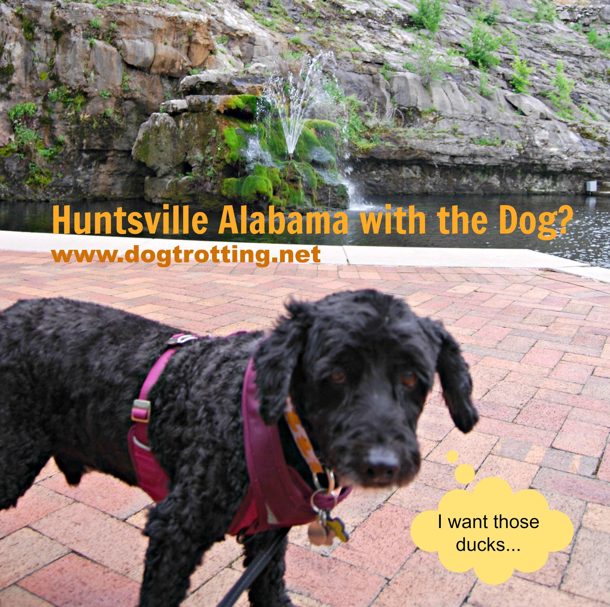 Dog by Big Spring Huntsville Alabama