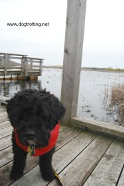 Victor on the Marshland Boardwalk