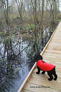 Boardwalk Trail at Point Pelee