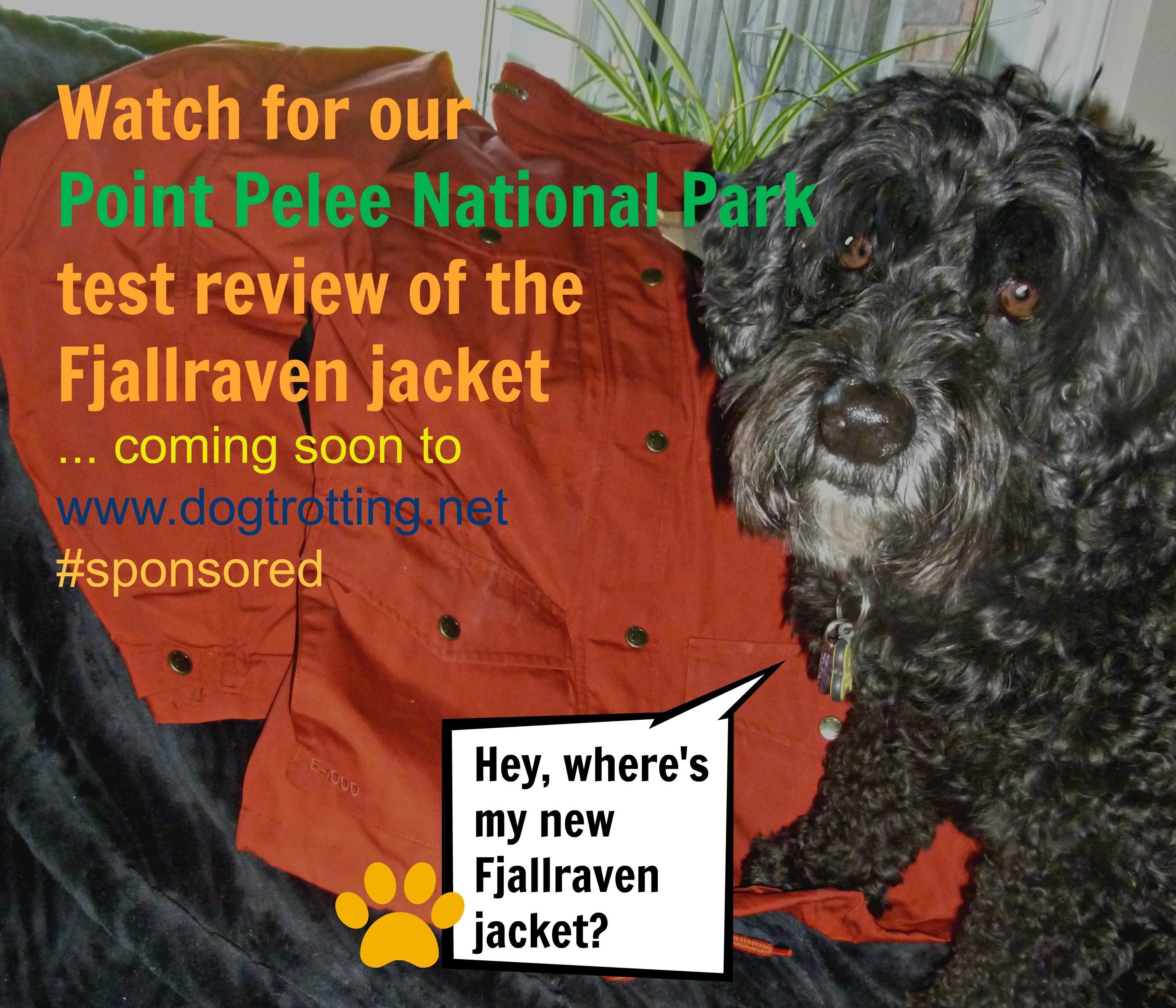 dog with fjallraven jacket