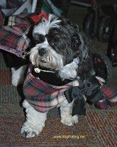blogpaws dog 3