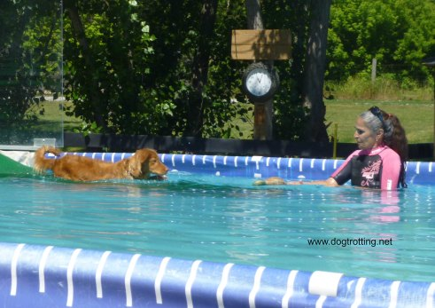 Dog Dock Diving at K9 Fun Zone Dawg Dayz of Summer event 2017