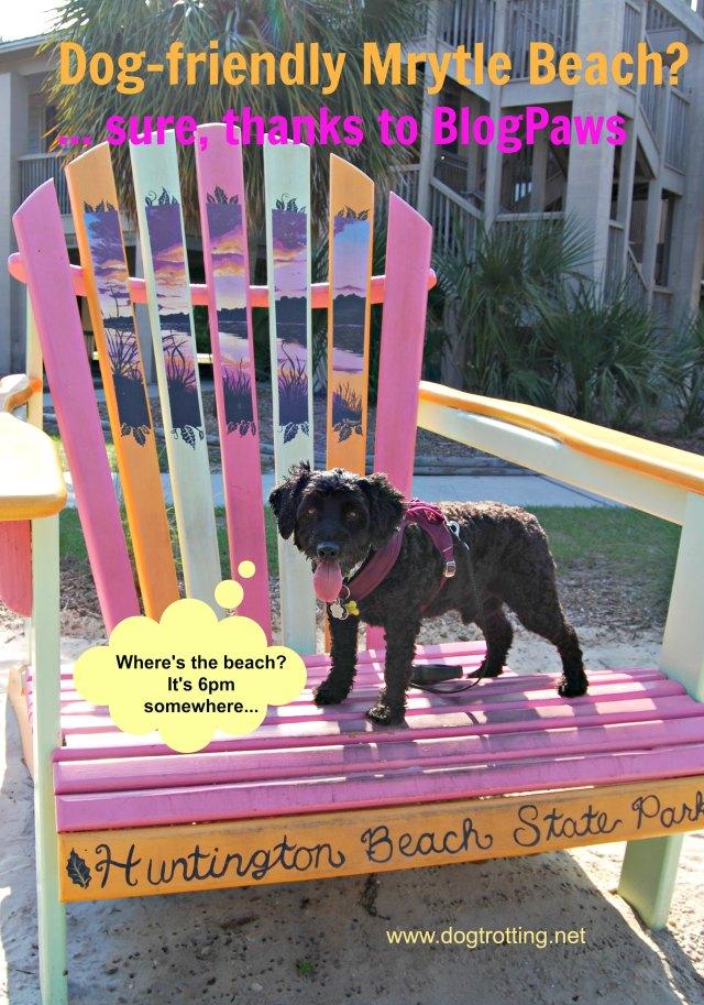 Dog on big Muskoka chair at Huntington Beach South Carolina