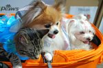dogs (and cat) at BlogPaws pet conference