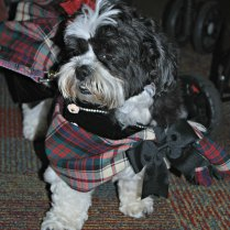 Dogs of BlogPaws