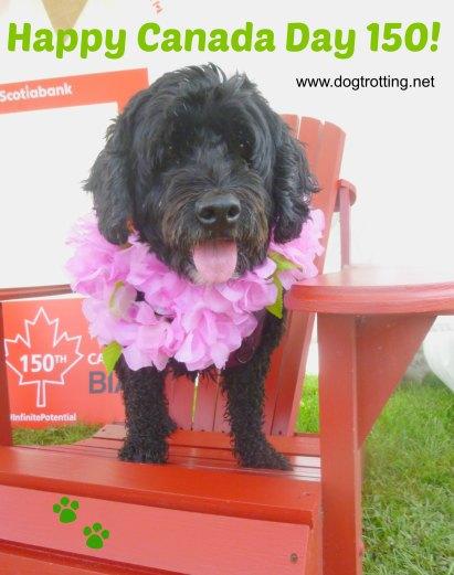 Dog at Caledonia Canada Day 150 Festival