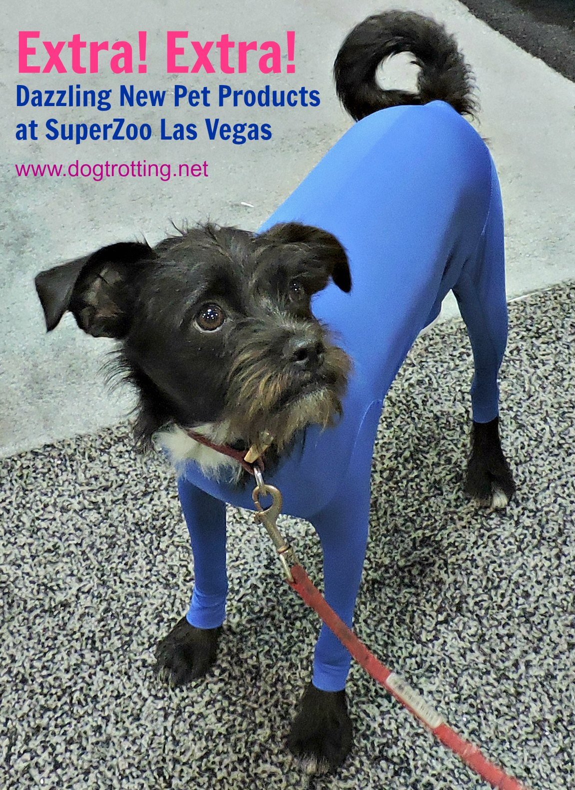 Lucky Seven Clever Pet Products at SuperZoo 2017, Las Vegas