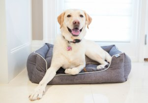 Yellow Lab laying on Messy Mutts bolster dog bed