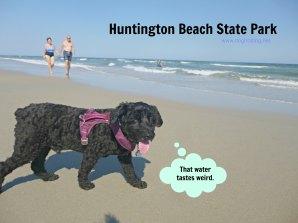 Dog at Huntington Beach at Myrtle Beach SC