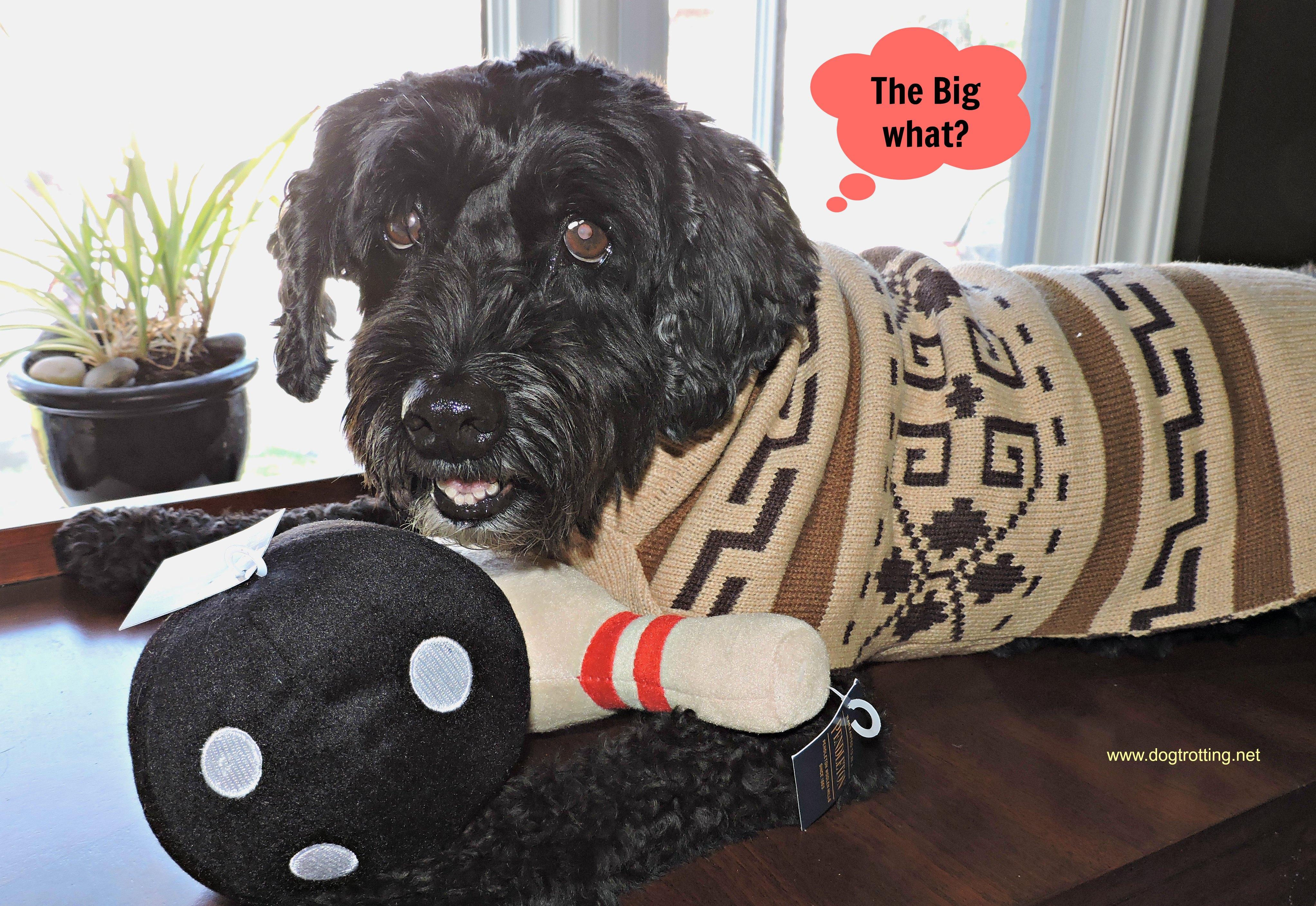 Carolina Pets Pendleton Dog Sweater on black dog dogtrotting.net