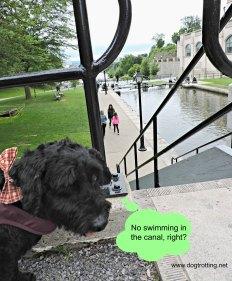 Dog at Rideau Canal, Ottawa, Ontario