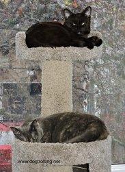 Daisy and Sally on climber