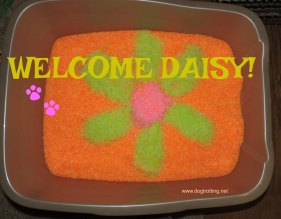 Daisy litter box2