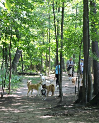 Bronte Creek Leash Free Dog Park