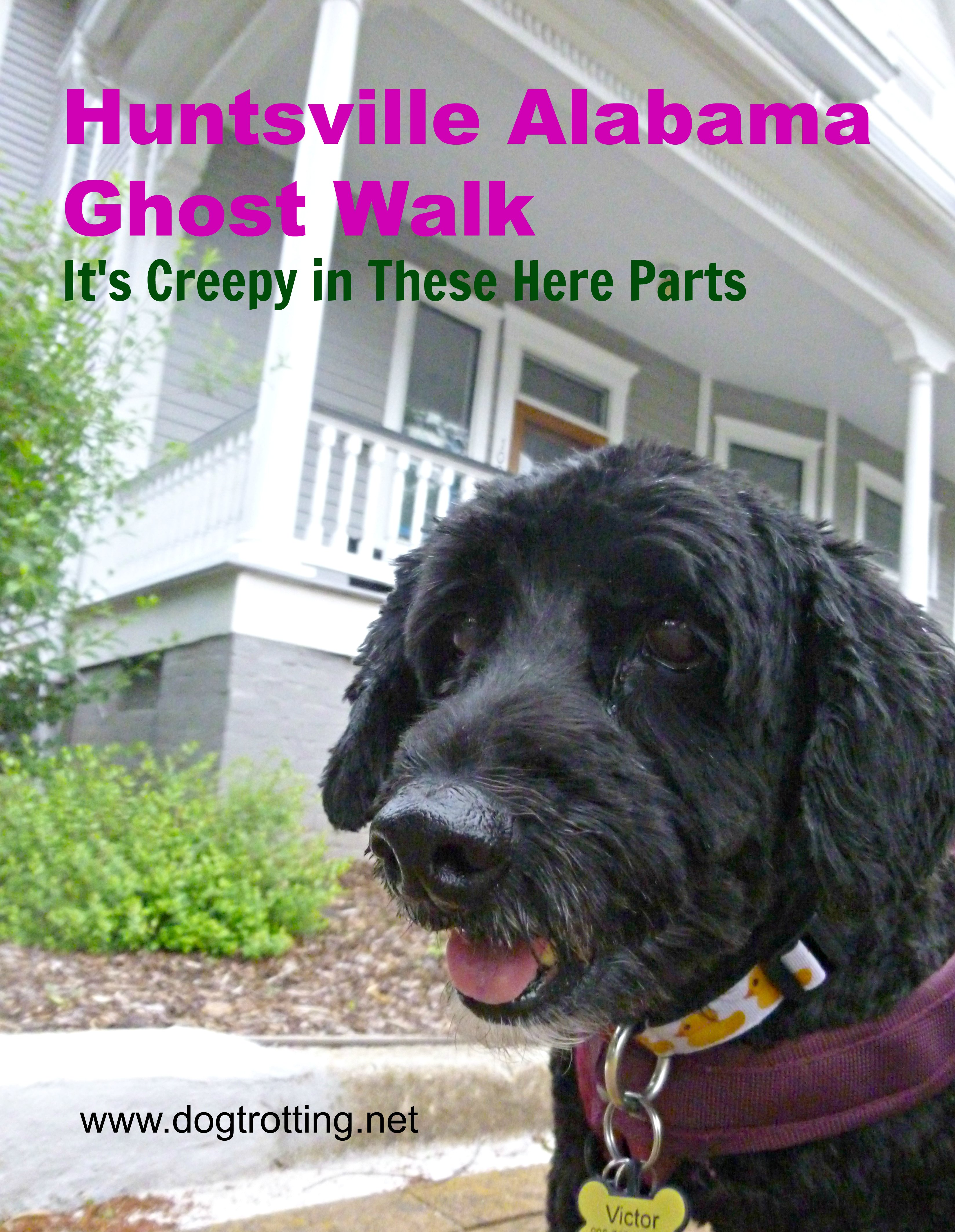 Dog on Huntsville Ghost Walk