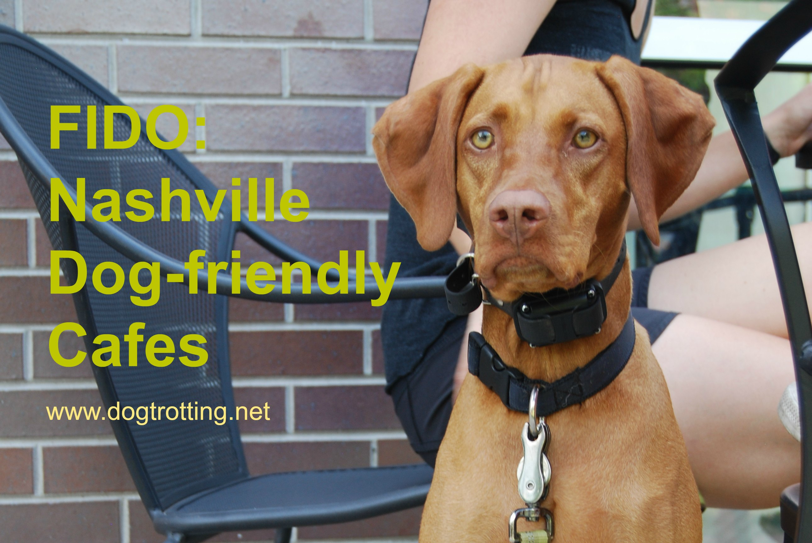 Travel Nashville, TN: Fido fooling coffee shop and dog-friendly locales