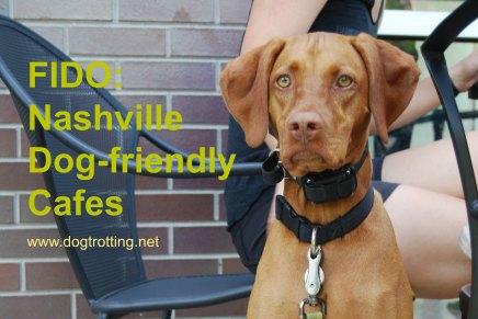 Nashville dog2