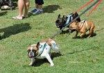 Dogs at Pawlooza 2017 dogtrotting.net