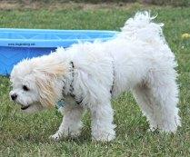 Dog at Pawlooza 2017 dogtrotting.net