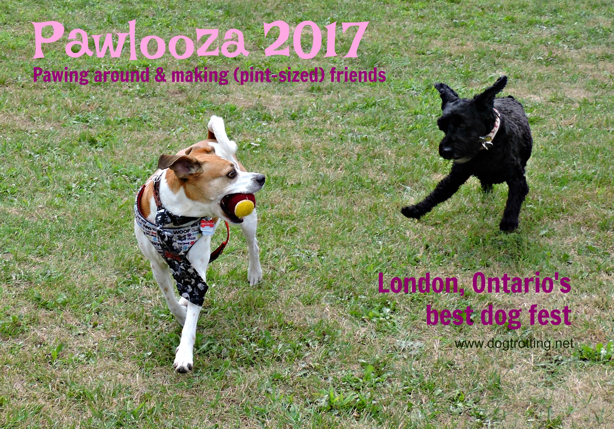Dogs at Pawlooza 2017 dogtrotting.net