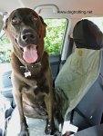 Dog using Solvit Car Seat Cover
