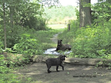 Dogs at Bronte Creek Provincial Park Dog Hiking Trail