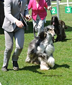 The Kilbride & District Kennel Club dogtrotting.net