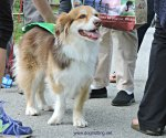 dog at Stouffville's Mutt Masquerade 2017 dogtrotting.net