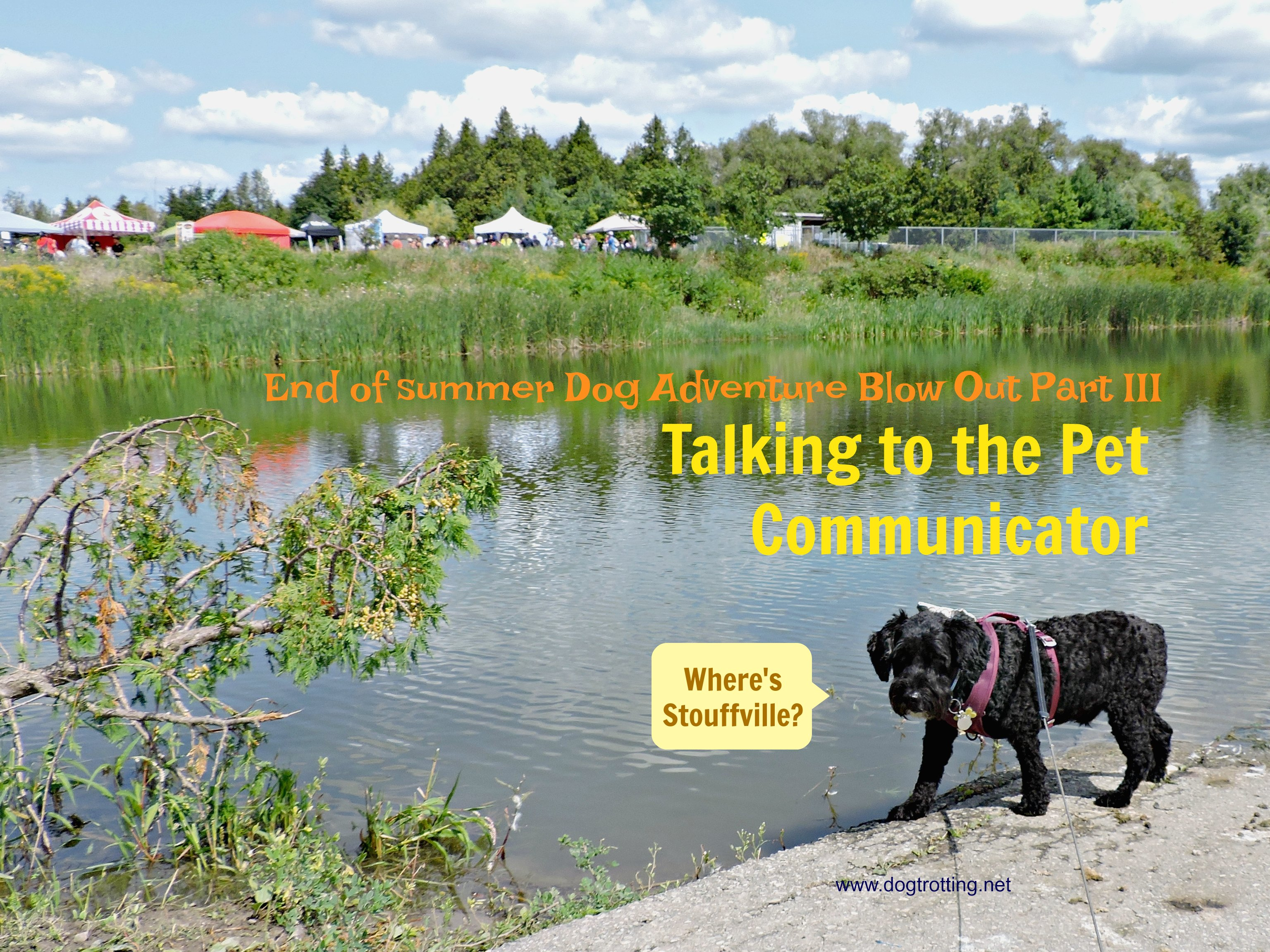 End of Summer Dog Adventure Part III: What does my dog say?