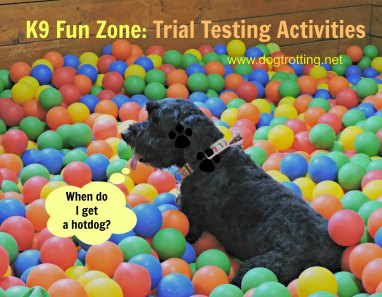 dog in the ball pit at K9 Fun Zone dogtrotting.net
