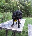Dog at Bronte Creek Provincial Park Dog Hiking Trail