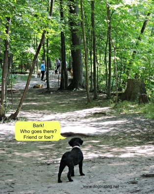 Bronte Creek Provincial Park Dog Hiking Trail