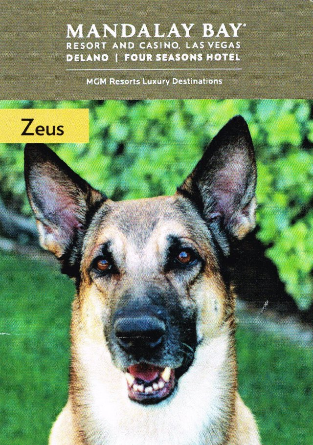Zeus Mandalay Bay Canine Team