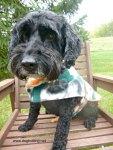 Dog wearing fall fleece jacket dogtrotting.net