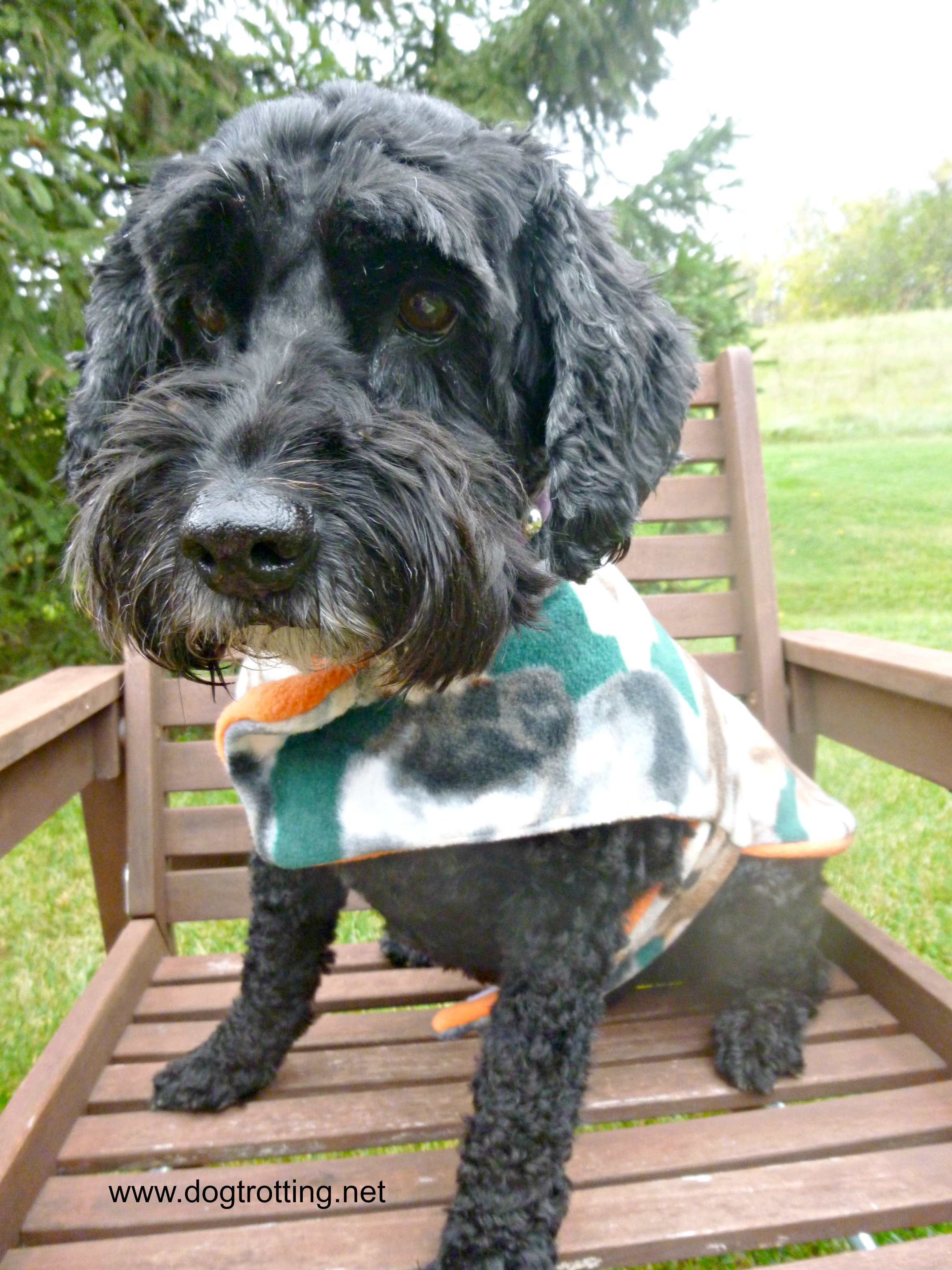 Dog wearing fall fleece jacket dogtrotting.net