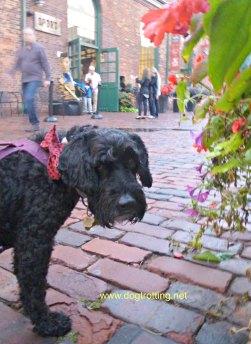 Haunted Walk Toronto dogtrotting.net