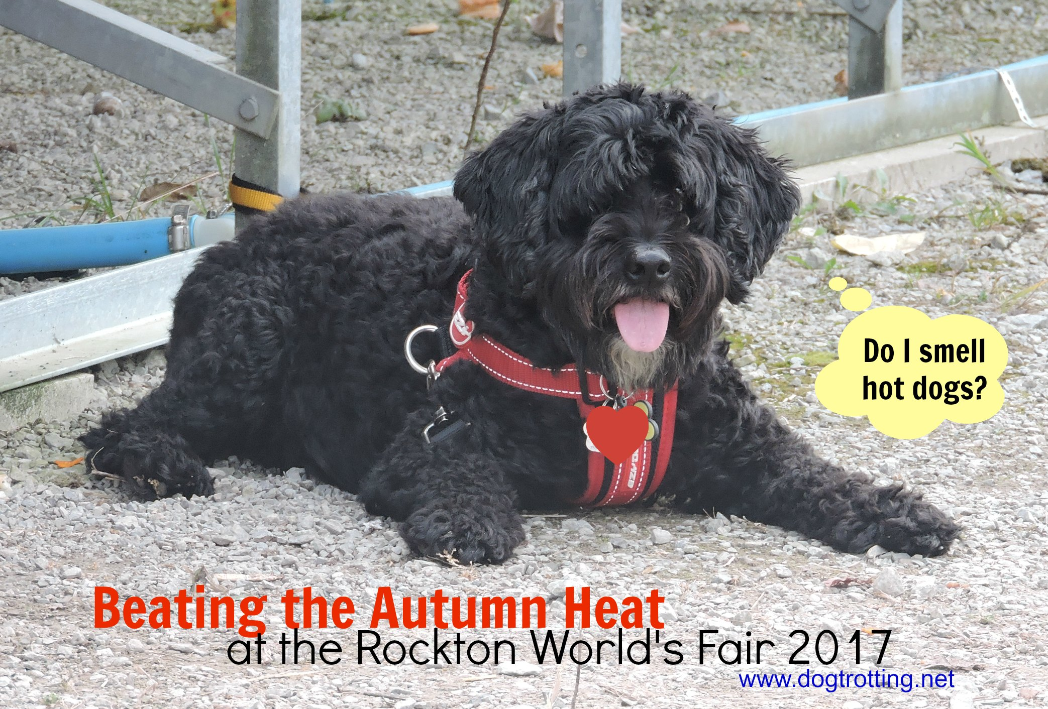 Travel Rockton ON: A Funny Thing Happened on the Way to the Fair (with my dog).